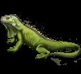 Iguana ##STADE## - scale 72