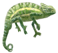 African Chameleon ##STADE## - scale 72