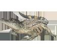 Crocodile ##STADE## - scale 66